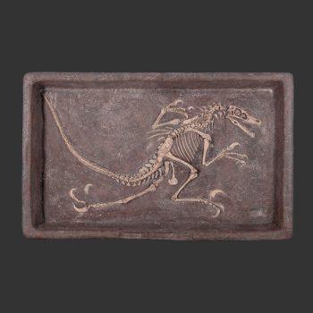 Fossielen uitgraven